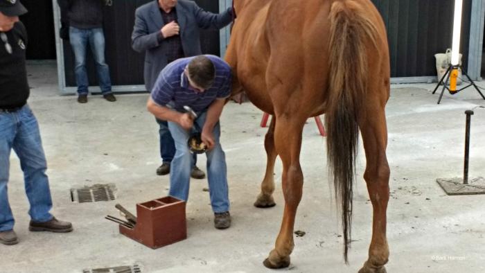 Horse show demonstration in Killarney, Ireland